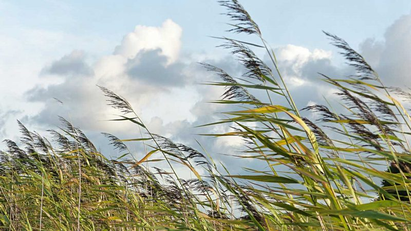 Ο άνεμος